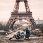 Как получить ВНЖ во Франции
